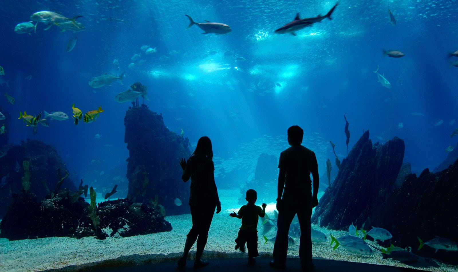 New England Aquarium Package Lenox Hotel Family Hotel In