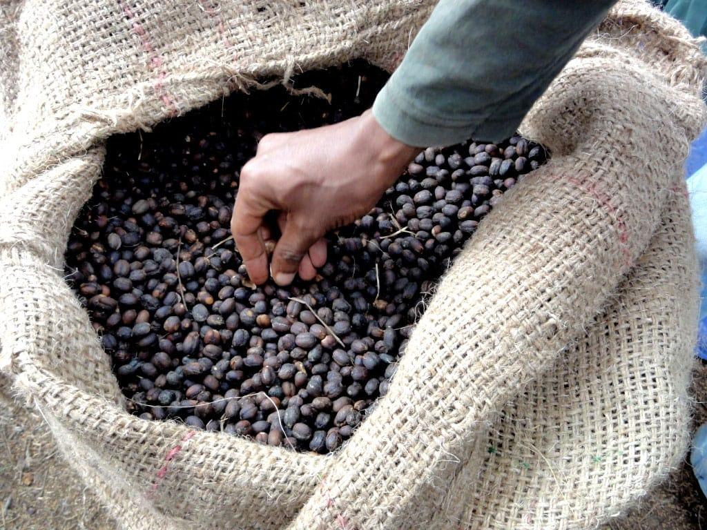 share coffee roasters ethiopia fahem