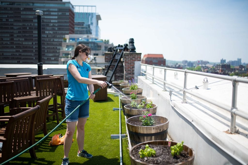 Watering the rooftop garden